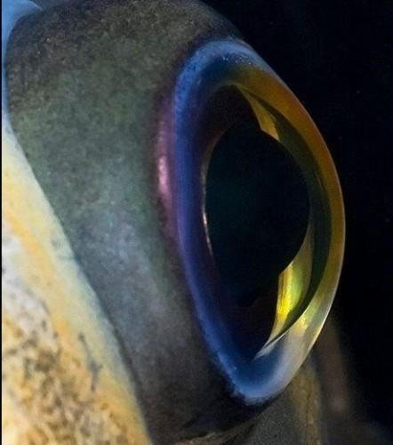 l'oeil du poisson, comment choisir la couleur de son leurre