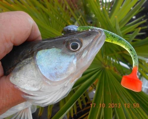 amazing fishing, les leurres souples à essayer !