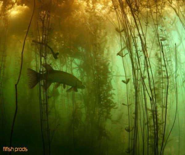 pêche du brochet en zone encombré