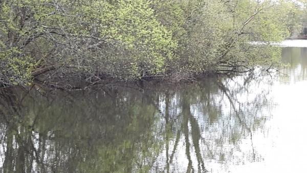 La pêche en étang ou eau dormante !