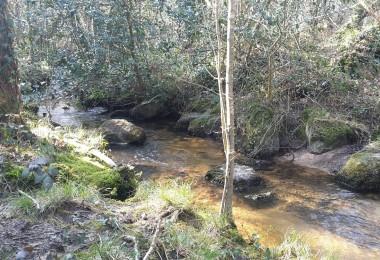 canne truite pour les petits ruisseaux !