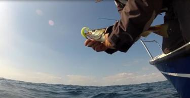 La pêche du lieu jaune au leurre souple et dur