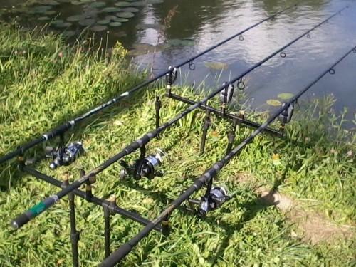 pêche de la carpe en plan d'eau surpêché