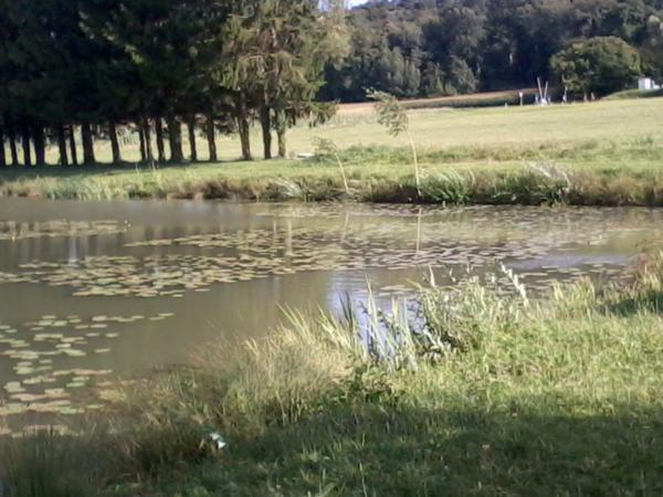 spot pour la pêche de la carpe