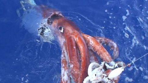 La pêche du calamar au leurre