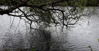 Pêche du carnassier en étang