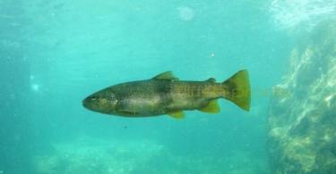 La pêche à la truite, une pêche technique